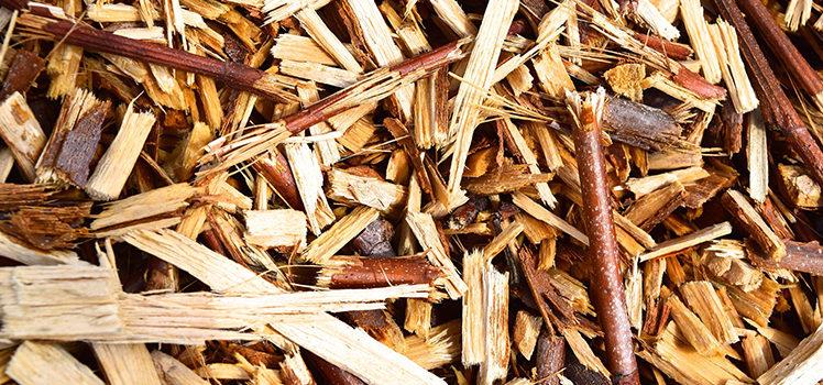 Energie rinnovabili e risparmio: vantaggi e svantaggi delle biomasse