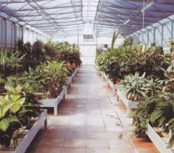 Interno di un tunnels adibito a garden con bancali in peralluma