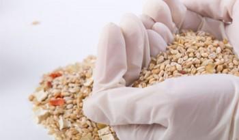 Санитарные требования в процессах размола: стерилизация зерна пшеницы